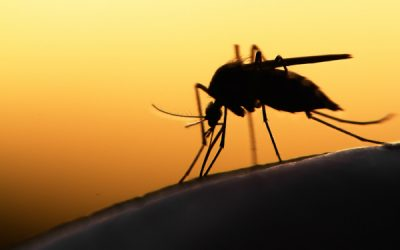 Malaria Fighting Drones