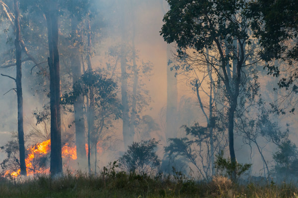 Bushfire Season: Are Firefighting Drones The Answer?